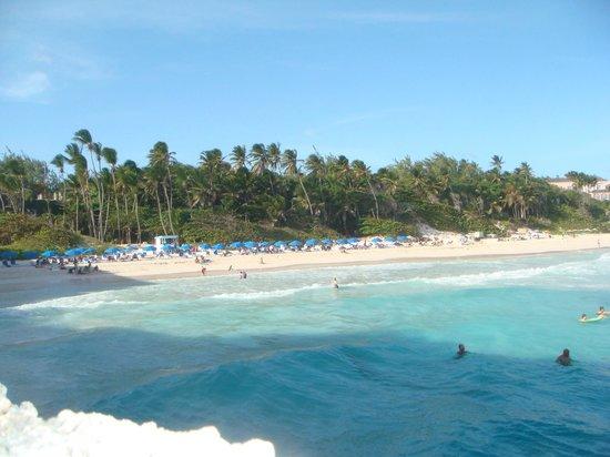 Bougainvillea Barbados: Crane beach