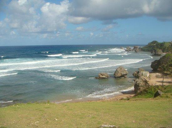 Bougainvillea Barbados: East coast