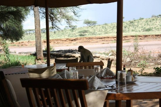 Breakfast Area Picture Of Elephant Bedroom Camp Samburu National Reserve Tripadvisor