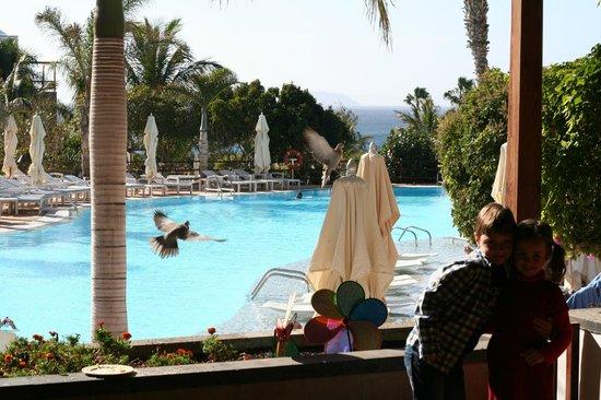 Princesa Yaiza Suite Hotel Resort:                   Piscina vista desde el comedor del desayno