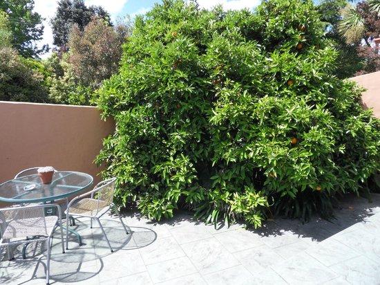 Botany Way Homestay - Bed & Breakfast:                                     terrasse privée