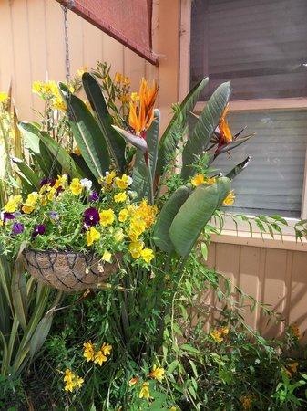 Botany Way Homestay - Bed & Breakfast:                                     jardin