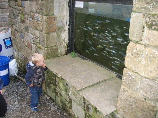 Raygill Lakes: Fish feeding pond