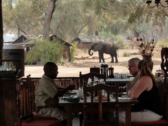 Old Mondoro Bush Camp:                   elephant in camp lunchtime