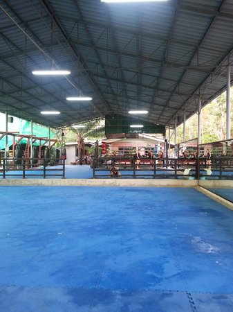 Tiger Muay Thai - Day Classes