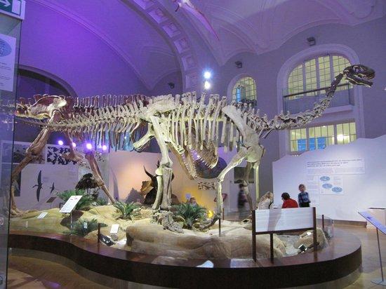 Natural History Museum (Luonnontieteellinen Museo):                                                                         Luomus