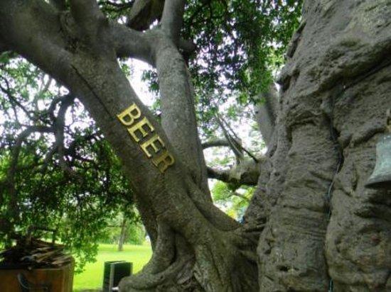Sunland Baobab Beer For
