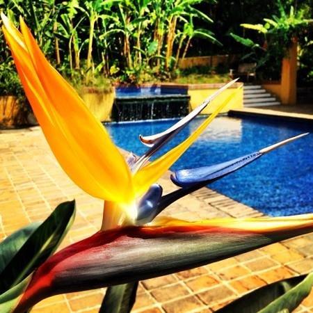 Quinta de las Flores :                                     bird of paradise poolside