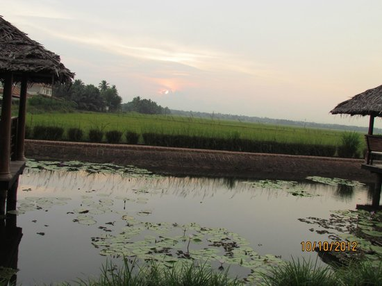 Citrus Retreats Alleppey: paddy fields