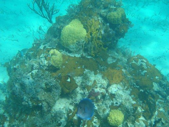 West Bay Club:                   Snorkeling Smith Reef
