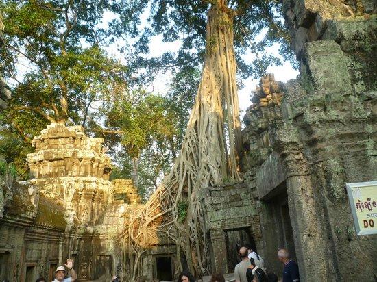 Sokha Angkor Resort: angkor