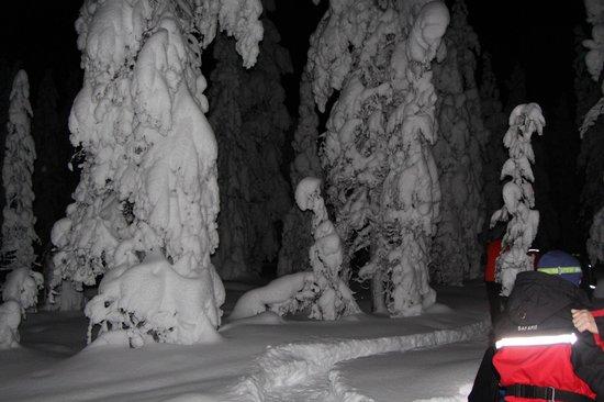 Lapland Safaris - Rovaniemi:                   Donker bossen en veel sneeuw