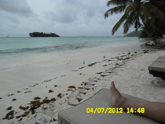 Paradise Sun: Alghe in spiaggia