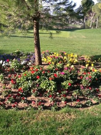 Gloria Verde Resort:                   February flowers , 4 th hole the new golf course