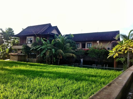 Bayu Guest House:                   Rice field view