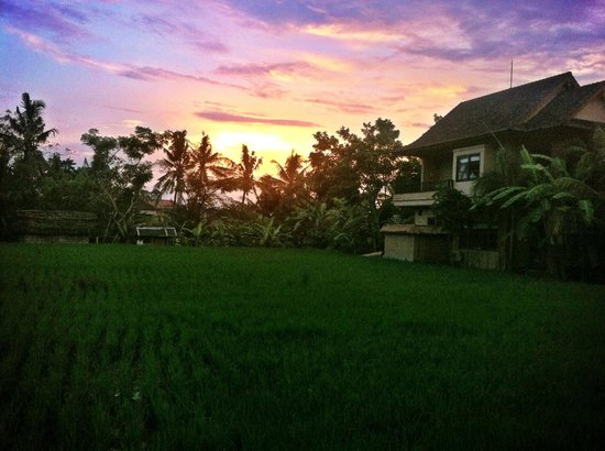 Bayu Guest House:                   Sunset view from Rama Room
