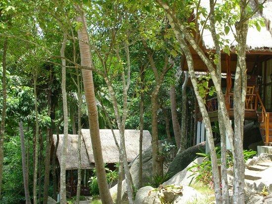 Ao Muong Resort :                   giungla