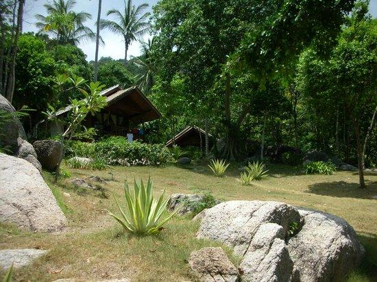 Ao Muong Resort:                   giungla