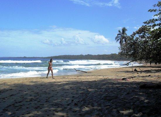 Agapi:                   Playa Cocles, Puerto Viejo