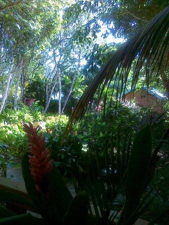 G te vert picture of au jardin des colibris deshaies for Au jardin des colibris