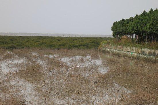 17 Km Bicycle Path:                   Mangroves