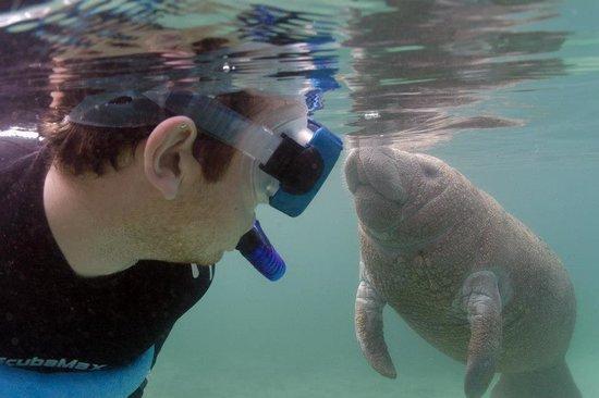 Fun 2 Dive:                   Gentle giants :)