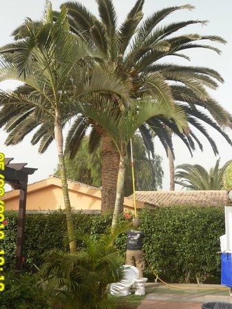 Dunas Maspalomas Resort:                   Bungalow