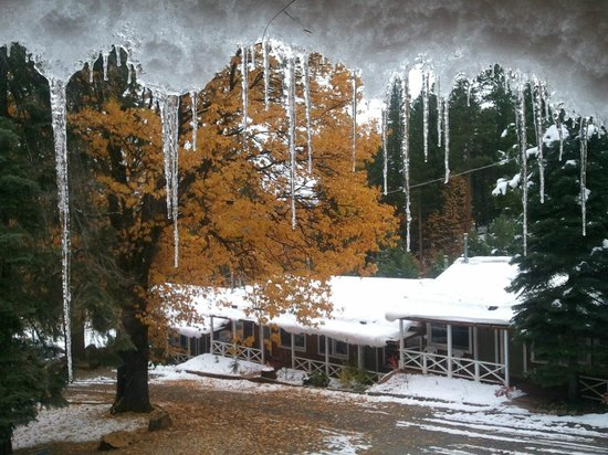 The Hideaway Motel: Late Fall image with Golden Oaks.