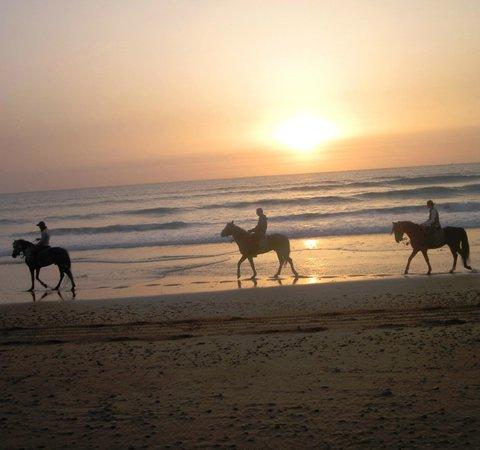 Zouina Cheval : Balade sur la plage au coucher du soleil, Essaouira...