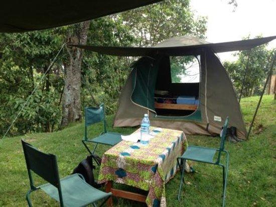 Nkuringo Bwindi Gorilla Lodge:                   my tent