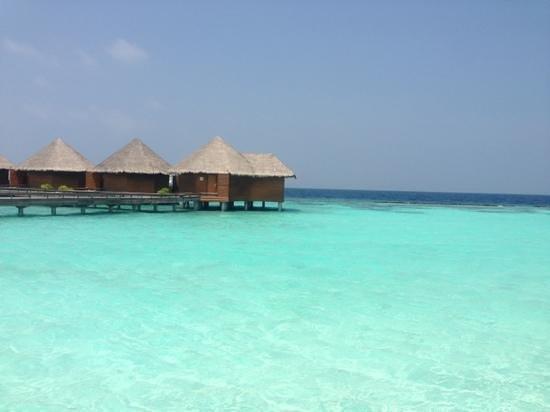 馬爾代夫巴洛斯度假村:                                     翡翠