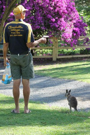 Clandulla Cottages, Beaudesert:                   Off to feed the animals with a litlle help