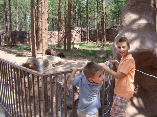 Bearizona Wildlife Park:                   Gli orsetti si guardano