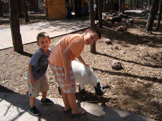 Bearizona Wildlife Park:                   Carina la capretta......