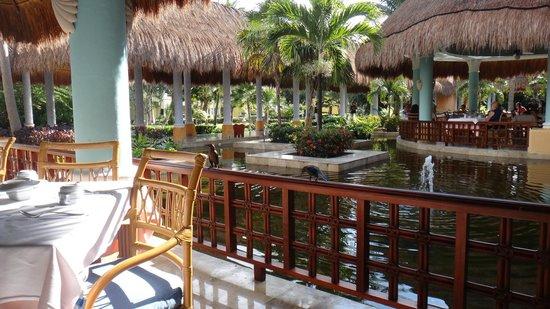 IBEROSTAR Paraiso Del Mar:                   Main buffet