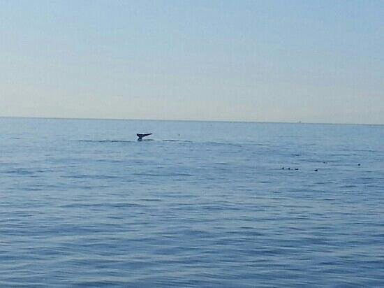 Redondo Beach Whale Watch:                   We saw a bunch of these on our trip!