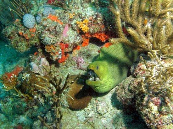 Capt Sl8r Charters:                   Green Eel