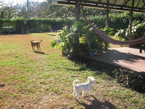 Casa Bella Rita Boutique Bed & Breakfast :                   The Pooches