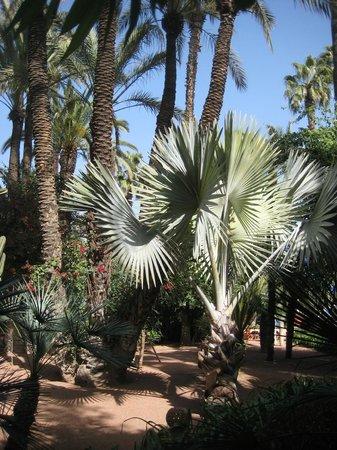 Riad Mur Akush: Jardin Majorelle