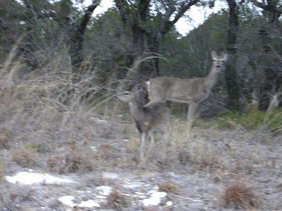 Pedernales Falls State Park: Deer everywhere