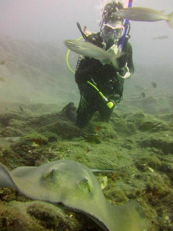 Mermaid Diving:                   again with the fabolous ray