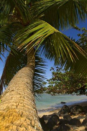 Kauai Photo Tours:                   The best photo tour on Kauai!