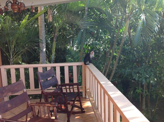 Hotel Costa Verde:                   Balcony from room with guest