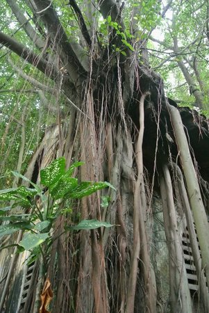 Sekeping Kong Heng:                   Almost like Angkor Wat...