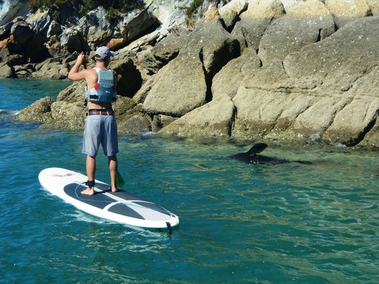 Abel Tasman Paddleboarding: Checking out the locals (seal)