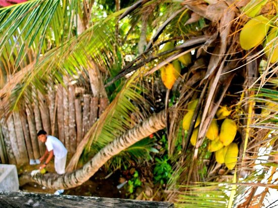 Bliss Hotel Seychelles:                   One of the lovely staff grabbing coconuts for us!