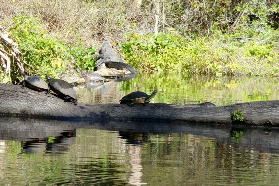 Central Florida Nature Adventures:                                     Turtles of all varieties