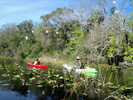 Central Florida Nature Adventures:                                     Birds flying over Kenny