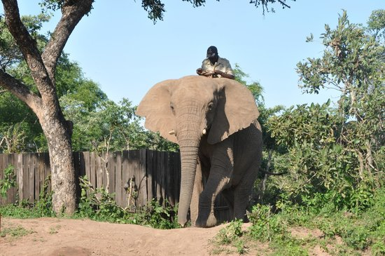 Royal Kruger Lodge:                   Madwala Elephant interaction