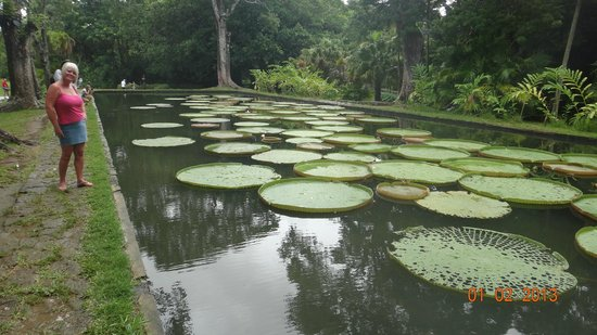 Maritim Resort & Spa Mauritius:                   Pamplemousses botanical gardens